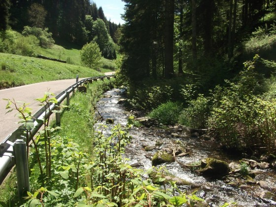 Im Schapbachtal-SW